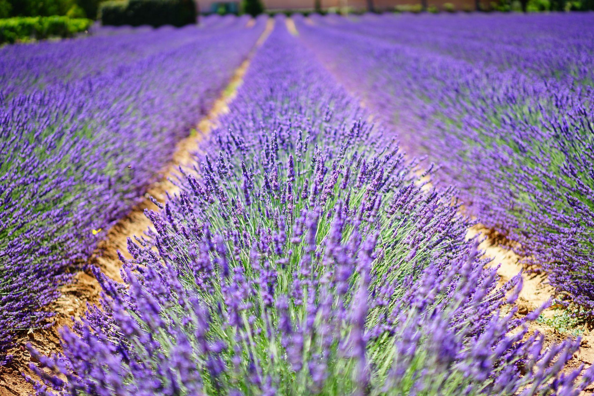 Provence 1